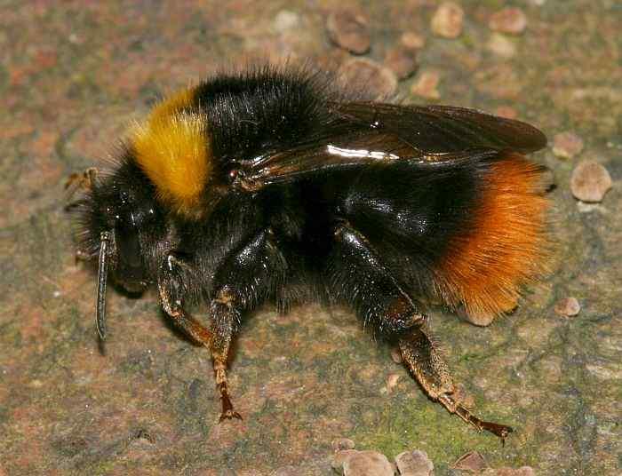 hummingbee.dk